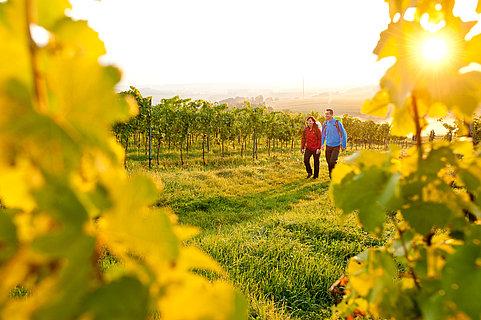Wanderer auf dem Pfälzer Weinsteig, Pfalz